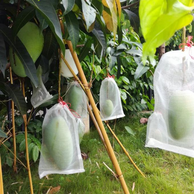 Fruit cover bags with chinese watermelon