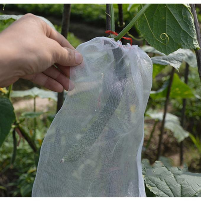 Fruit cover bags with cucumber