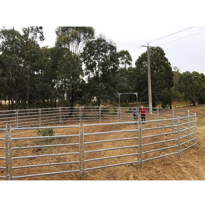 galvanized corral cattle panels made up a round yard pen